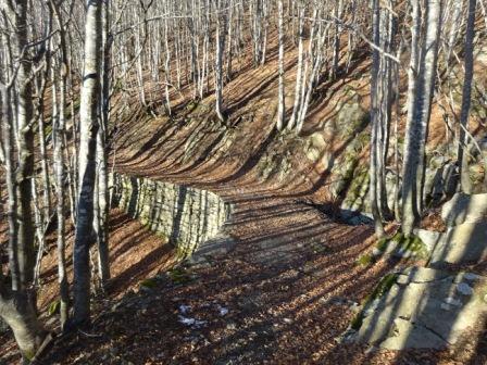 Strada forestale per Monte Spicchio