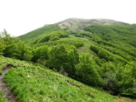sentiero Passo Pratizzano Monte Ventasso