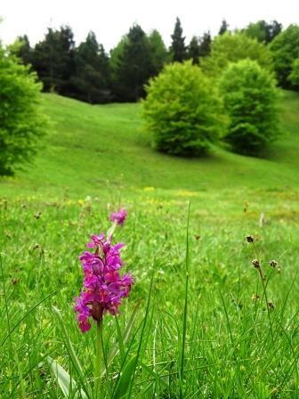 Orchidea Lago Calamone