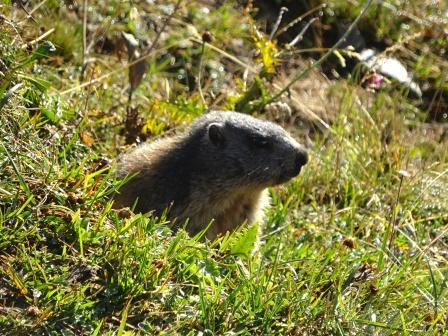 Trekking Monte Basodino Marmotta