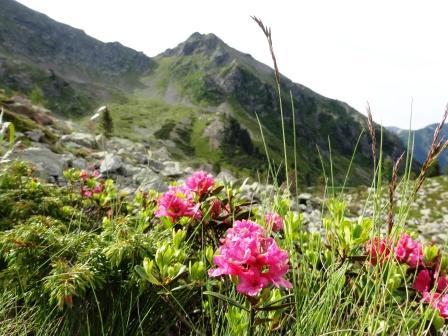 Sentieri dei Lagorai Rododendri Forcella del Frate