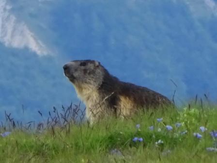 Marmotta Monte Cusna