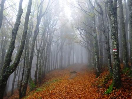 Sentiero 00 Foreste Casentinesi