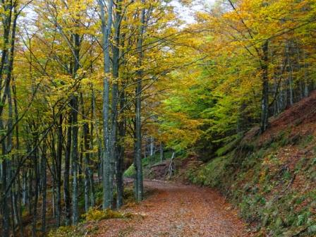 Colori Foreste Casentinesi
