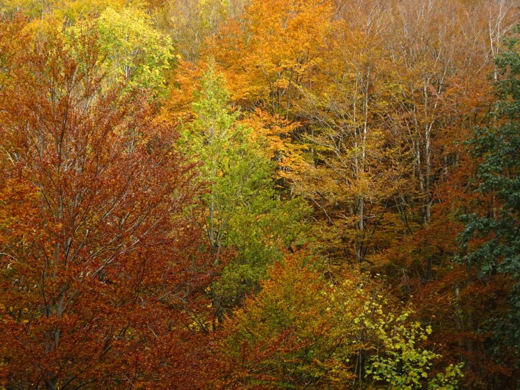 Colori autunnali Foreste Casentinesi