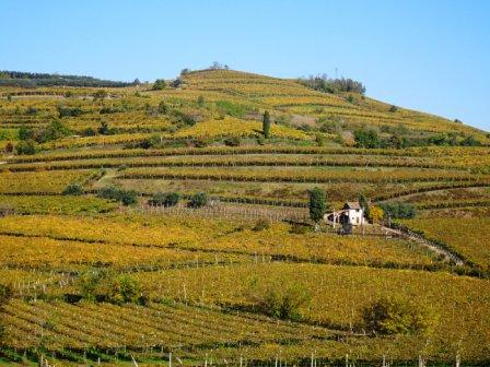 Colline di Monteforte d'Alpone, percorso 10 capitelli, vigneti