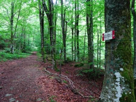 Valle del Dardagna sentiero 333