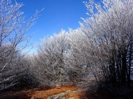 Alberi ghiacciati Passo Faiallo