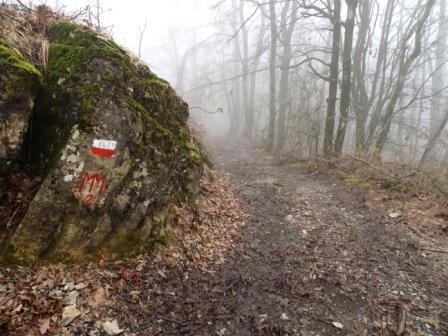 Bedonia sentiero 823