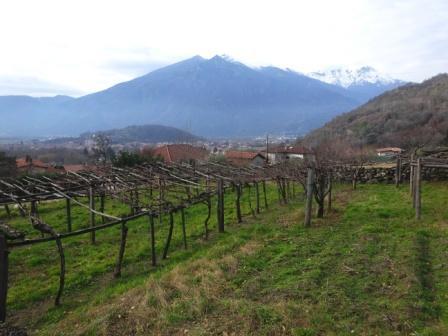 Vigne valle Dora Baltea