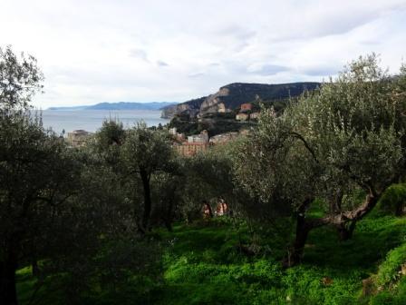 Finale Ligure ulivi