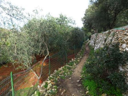 Sentiero per Verzi