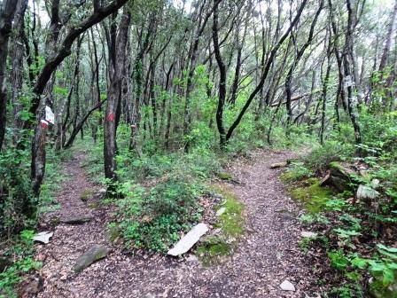 bivio giro del Monte Telegrafo sentieri Chiavari