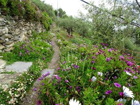 fiori ulivi sentieri Chiavari