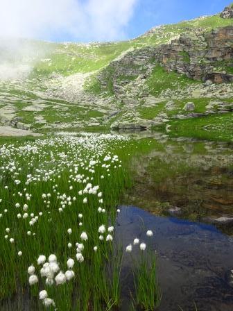 eriofori lago vercellina